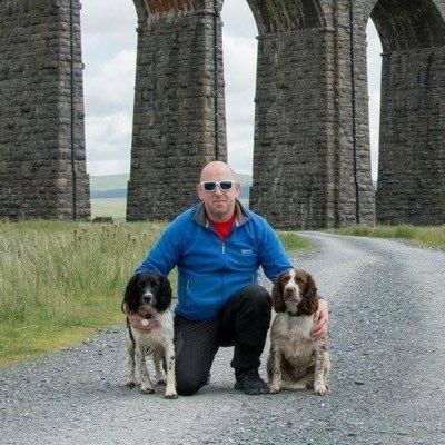 dogs4walks