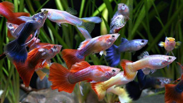 Timperley Aquatics